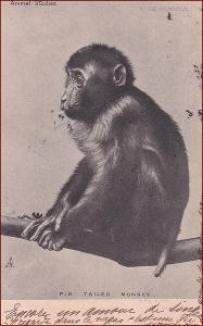 Opice * divoká zvířata * X476
