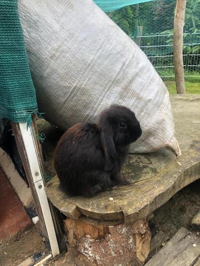 Nabízíme k prodeji zakrslé králíčky ze svobodného volného chovu ... - Zvířata