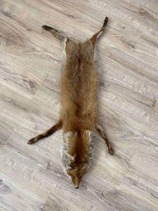 Liška, kožešina - starožitná