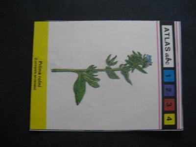Papírová kartička-rostliny drsnolisté s popisem