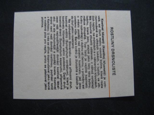 Papírová kartička-rostliny drsnolisté s popisem - Ostatní
