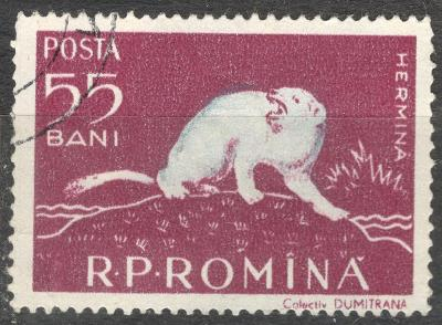 Rumunsko 1957 fauna delty Dunaje Mi 1690 Lasice hranostaj Mustela erm