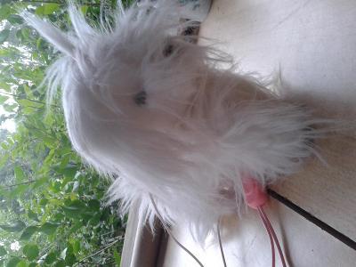 pes na bateriový pohyb, chlupatý - VIZ FOTO