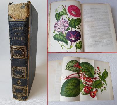 Flóra skleníků a zahrad Evropy z r. 1856 - 94x kolorovaná litografie