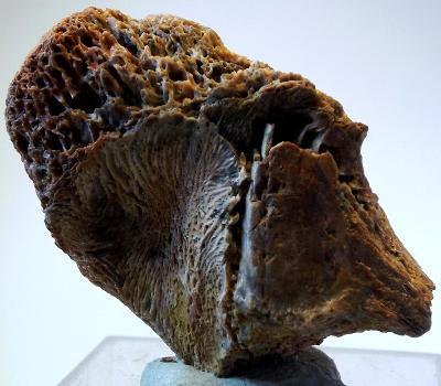 Dinosauří kost 4