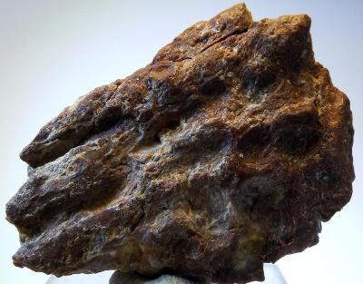 Dinosauří kost 6