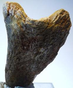 Dinosauří kost 12