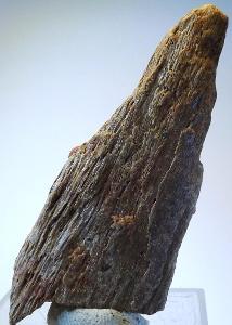 Dinosauří kost 13