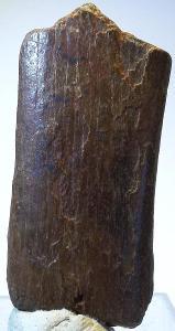 Dinosauří kost 14