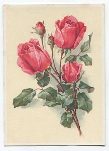 RŮŽE, kytice, květiny, flóra, Německo