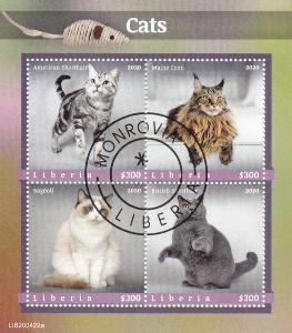 Kočky 10