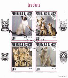 Kočky 16