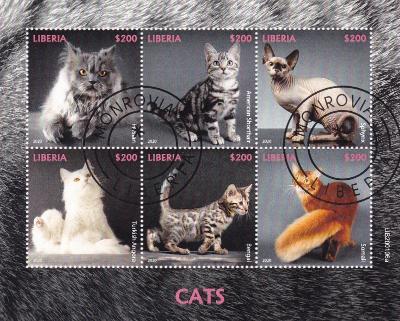 Kočky 21