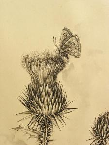 Kresba perem - Signováno - Motýl na bodláku - (L185)