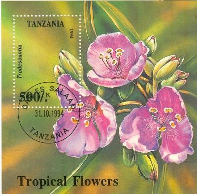 Afrika, Tanzánie, květ  transcantia - odénka,   razítko