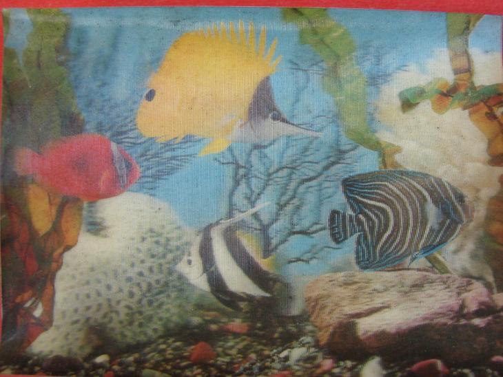 ZVÍŘATA Ryby Rybičky 3D Plastické Pohyblivé CIZINA - Pohlednice