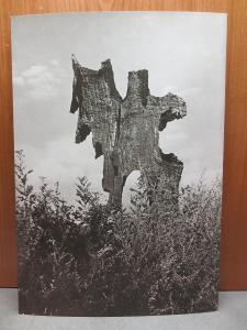 Josef Ehm - Strom - fotografie - 30 x 20 cm