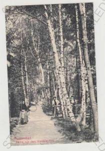 Františkovy lázně (Franzensbad), strom