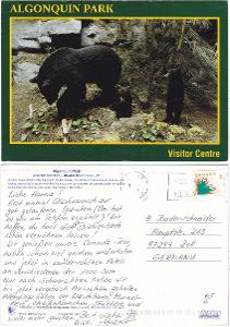 Kanada - černá medvědice