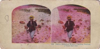 Stereoskopie žena a dítě u stromu, Hawai