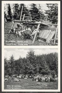 TOP! Podkarpatská Rus ca 1930, Jasiňa Kvasy, ovce ovčáci na poloninách