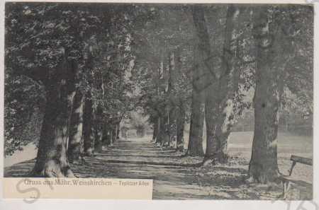 Hranice na Moravě, alej (Mährisch Weisskirchen - T - Pohlednice