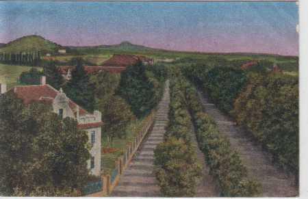 Jičín, partie lipového stromořadí, kolorovaná