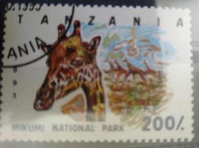 Tanzánie, žirafa