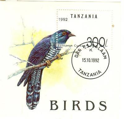 Afrika, Tanzánie,  kukačka, aršík , ražený