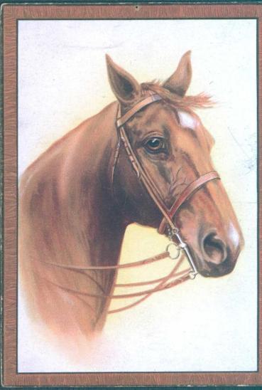 25A7 Žánrová pohlednice - obraz koně