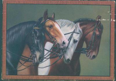 25A8 Žánrová pohlednice obraz koně