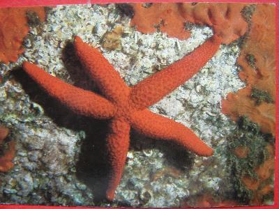 ZVÍŘATA Mořský svět Mořská hvězdice CIZINA