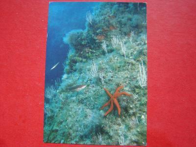 ZVÍŘATA Mořský svět Hvězdice Korál žlutý Cizina