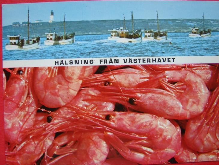 ZVÍŘATA Mořský svět KREVETY Cizina  - Pohlednice