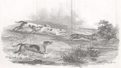 Hon na lišku, Garrard, mědiryt, 1810