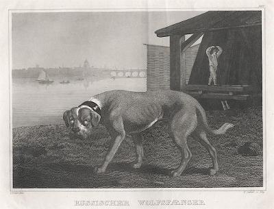 Wolfsfaenger, Meyer, oceloryt, (1840)