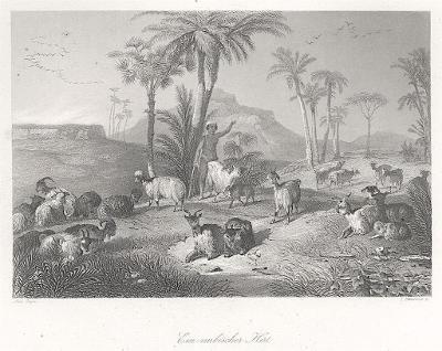 Nubijský pasák, Payne, oceloryt, 1850