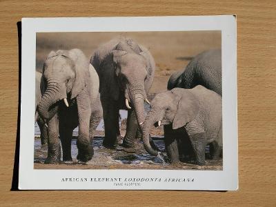 Pohlednice Slon Sloni Jižní Afrika JAR