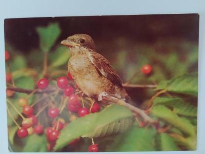 Pohlednice Pták Ptáci
