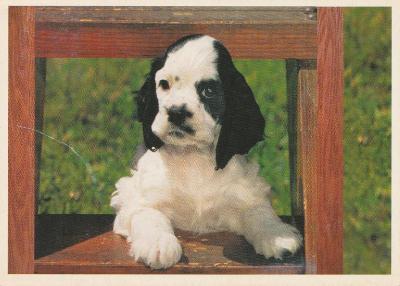 Pes - Tak co si přejete