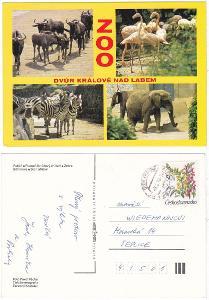 Zvířata v ZOO Dvůr Králové nad Labem