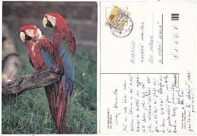Papoušek ara zelenokřídlý