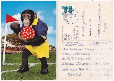 Německo - Opička