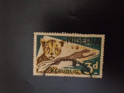 Nigérie, gepard štíhlý
