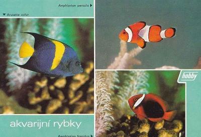 AKVARIJNÍ RYBKY - KORÁLOVÉ - OKÉNKOVÁ - 74-ZY2