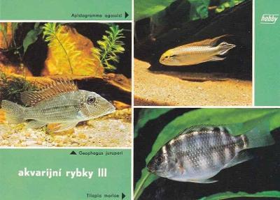 AKVARIJNÍ RYBKY - CICHLIDY - OKÉNKOVÁ - 74-ZY21