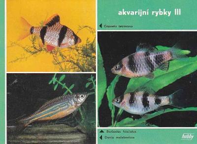 AKVARIJNÍ RYBKY - KAPROVITÍ - OKÉNKOVÁ - 74-ZY24