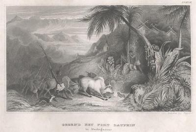 Madagaskar Dauphin, Meyer, oceloryt, 1850