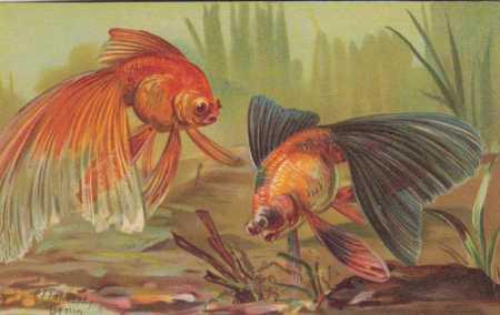 Zvířena, akvarijní zlaté rybky, zoologická zahrada