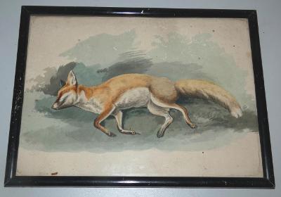 Obraz akvarel liška